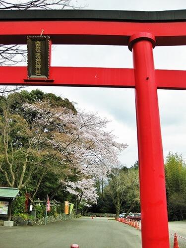 はだの桜みちと湧水&寺社めぐり 女子旅な市街地コース