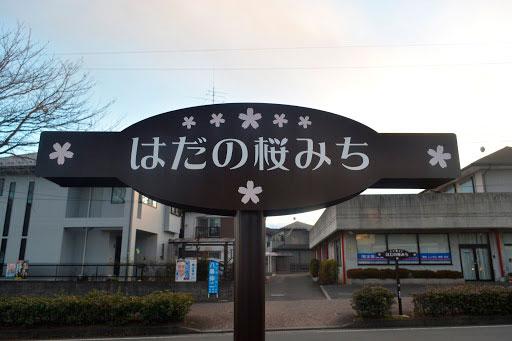 はだの桜みち/神奈川県最長の桜並木