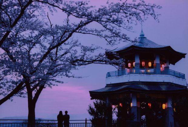 弘法山公園/お花見登山しよう