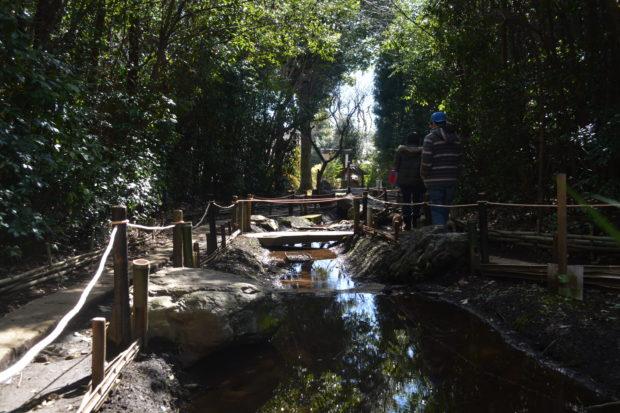 出雲大社相模分祠/森の中で湧水と遭遇「関東のいづもさん」
