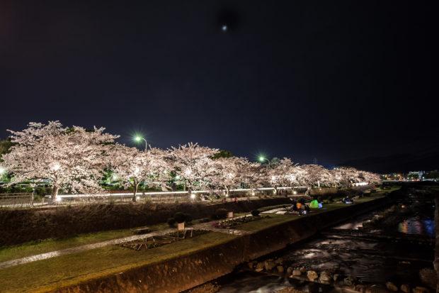 秦野市カルチャーパーク/水無川でソメイヨシノ散策