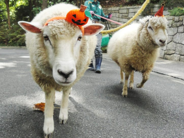 ハロウィンは金沢動物園へ仮装してGO!!動物たちと一緒にパレードも!(9月28日更新)