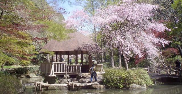 川崎「東高根と古代遺跡めぐり」~桜と遺跡と長尾の里~