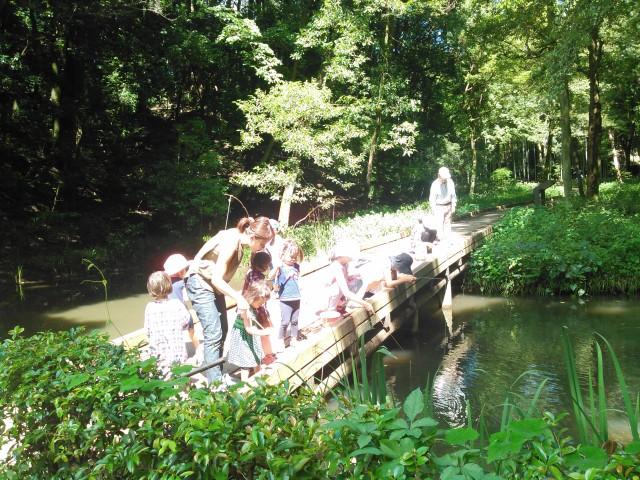 夏休みザリガニ捕獲イベント!協力家族にはお土産も。8月24日(木)県立東高根森林公園(川崎市宮前区)