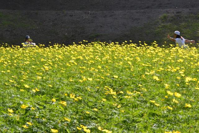 横須賀くりはま花の国・コスモスまつり