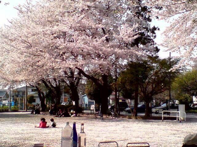 さがみはら松が枝公園で「おださがさくらまつり」初開催
