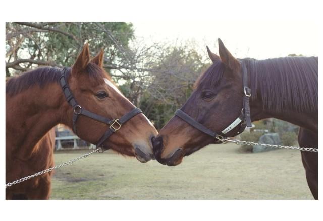 「馬の博物館」開館40周年記念!オリジナルポストカードのプレゼントや乗馬など馬とふれあえるイベントも!
