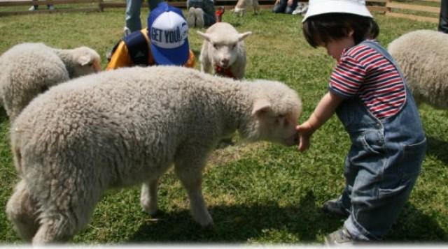 三井アウトレットパーク多摩南大沢に❝3連休毎日ちがう❞牧場動物が集合