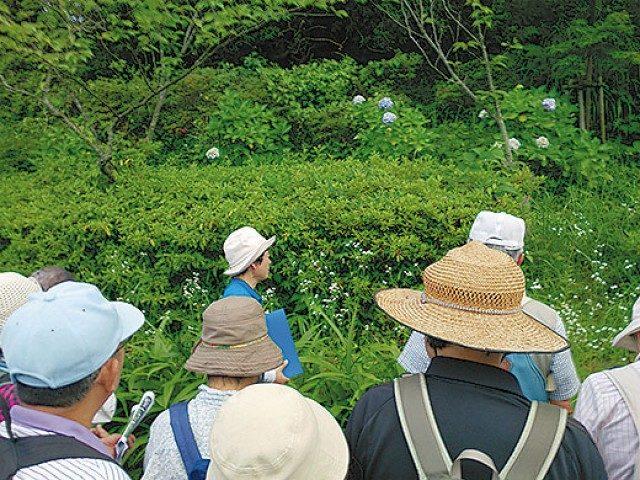 初夏の山野草を観察 6月25日 参加者募集@県立塚山公園/横須賀