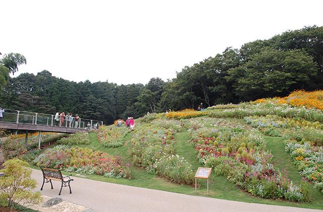 旭区 里山ガーデン秋の大花壇 限定で再公開