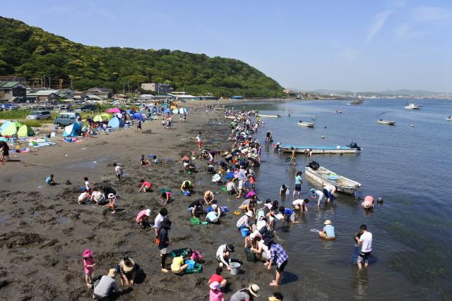 潮干狩りシーズン到来!横須賀走水海岸で天然アサリ収穫