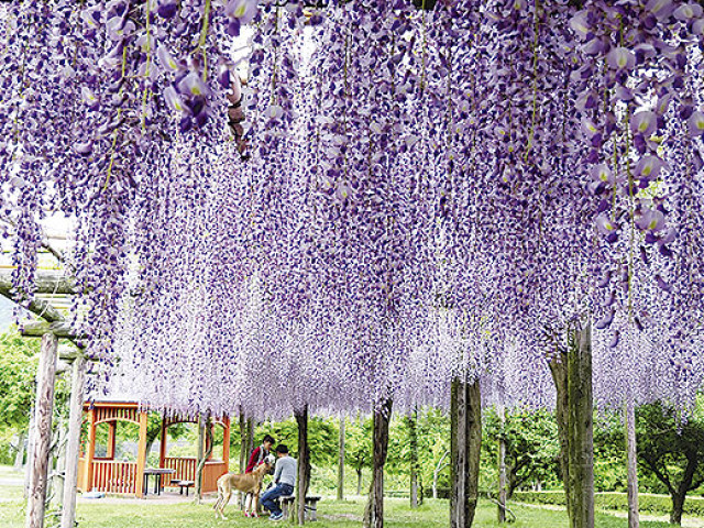 カメラを持って公園に 神奈川県公園協会「第9回花とみどりのフォトコンテスト」作品募集