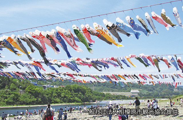 壮観!約1000匹が舞う「泳げ鯉のぼり相模川」@相模川高田橋上流(相模原市)