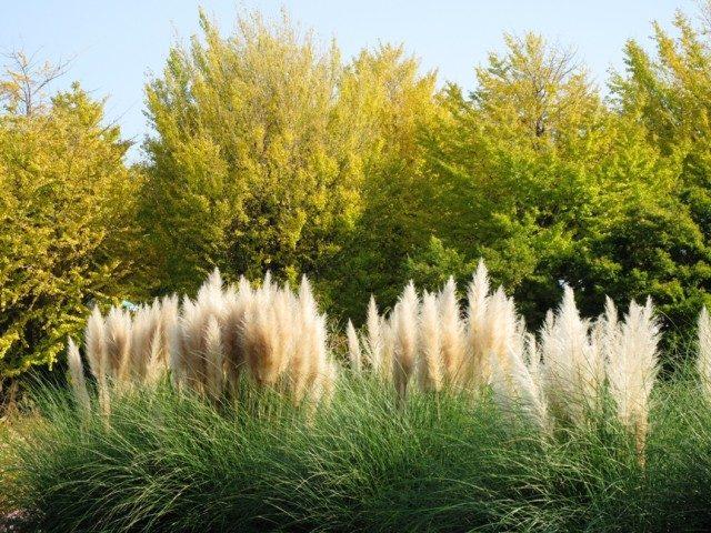 フラワーセンター大船植物園、秋の花々が見ごろに。