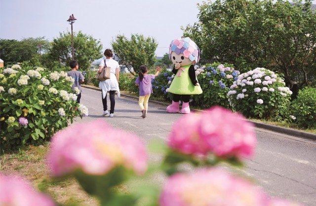 開成町あじさい祭り、いよいよ明日から開幕です!!~6/12まで
