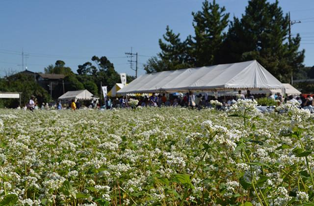 花も楽しめる瀬谷区の恒例イベント「そばまつり」