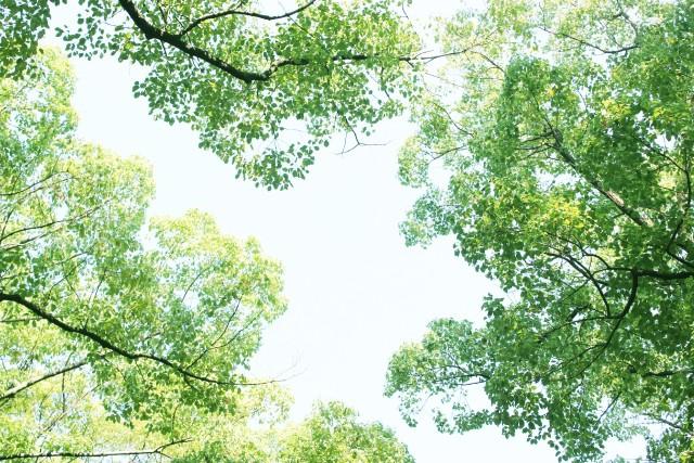 """海が見える森、「湘南国際村めぐりの森」(横須賀)で学ぶ!五感で体感""""大地の再生講座~結の杜づくり~"""""""