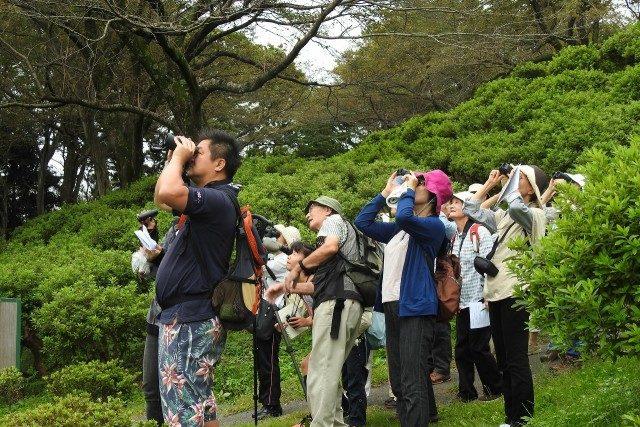キビタキやアオバト、カワセミ…二宮町内で秋の渡り鳥を探してみませんか