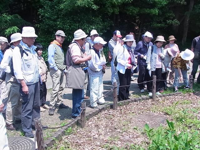 県立東高根森林公園(川崎)で身近な自然観察会。9月のテーマは「花と虫&クモの生活を覗く」
