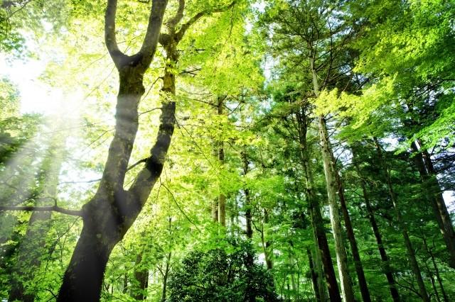 永瀬嘉平さん講師の「知れば知るほど木が好きになる『60本の木』」ほか生涯学習講座