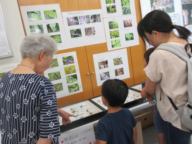 夏休み特別企画「昆虫展」&次世代につなぐ自然講座「ホタルのふるさと港南台」@横浜市港南台地域ケアプラザ