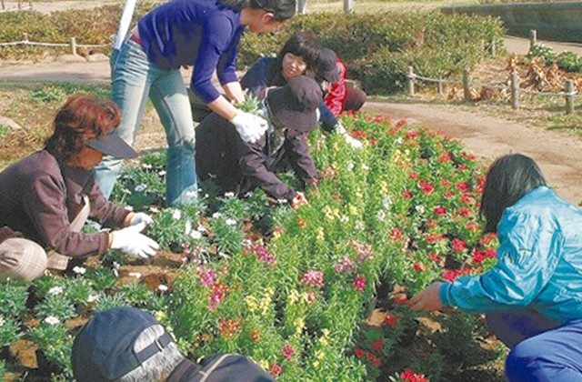 神奈川県公園協会が地域の団体に花苗配布