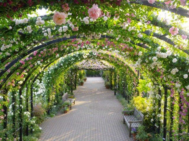 名物のローズトンネルなどガーデン全体で1700品種が最盛期に@横浜イングリッシュガーデン(横浜市西区)