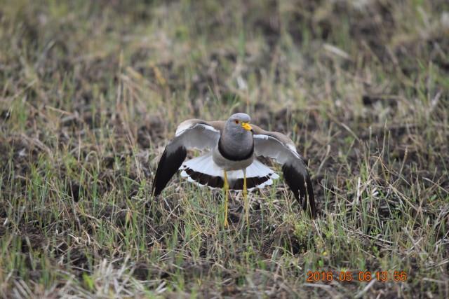 二宮町の野鳥写真、バードカービング展示、野鳥クイズも。『二宮野鳥の会』展