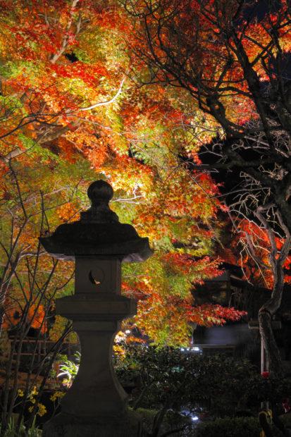 長谷寺で「秋の夜間特別拝観」11月23日(金)~12月9日(日)