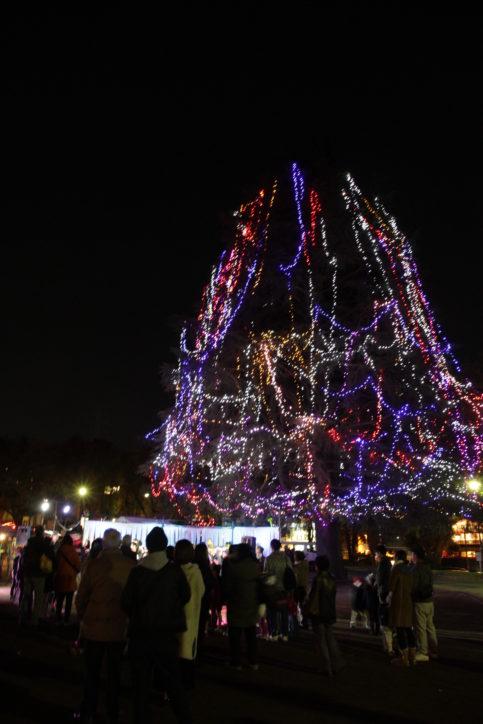 高さ25m!横浜・美しが丘公園に巨大クリスマスツリー登場