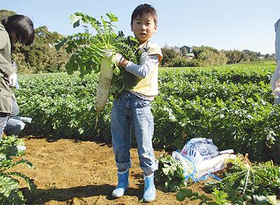 畑がまるごと直売所に!名産三浦だいこんほか旬の野菜を収穫しよう