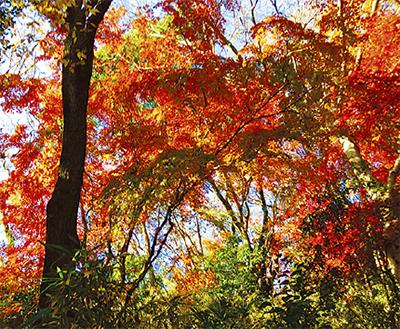 金沢八景西側の自然豊かな森で紅葉狩りしよう【先着60人】