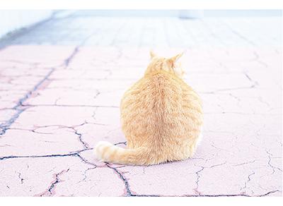 写真展「ぶらり散歩~7つの湘南海街Story~」@Cafe Cure