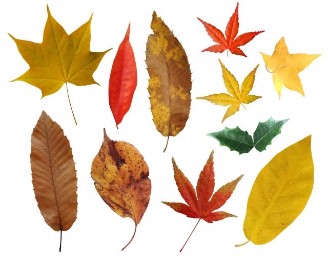 大師公園で「落ち葉を楽しもう」防災&環境フェスタも同時開催