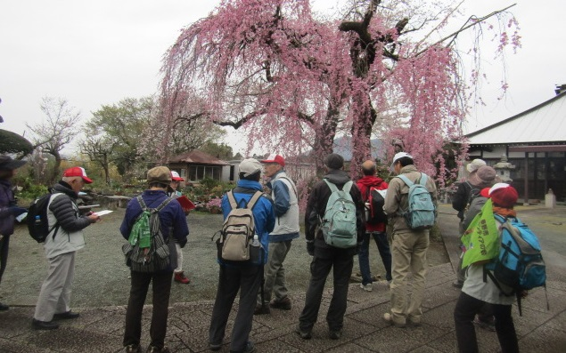 横野と戸川の寺社と水無川・桜土手古墳公園の桜散策
