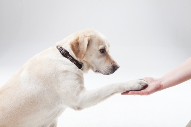 犬も人も幸せに暮らすために!「犬のしつけ方セミナー」@秦野市文化会館