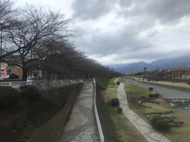 秦野・ソメイヨシノの定点観測2019