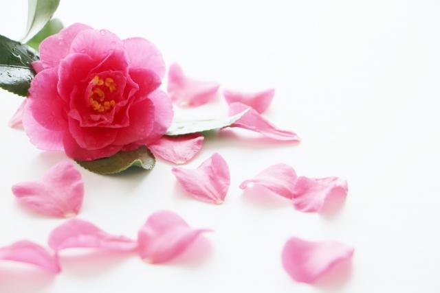 花の童謡と歌を歌おう「心のふるさと童謡講座~花の歌を集めて~」