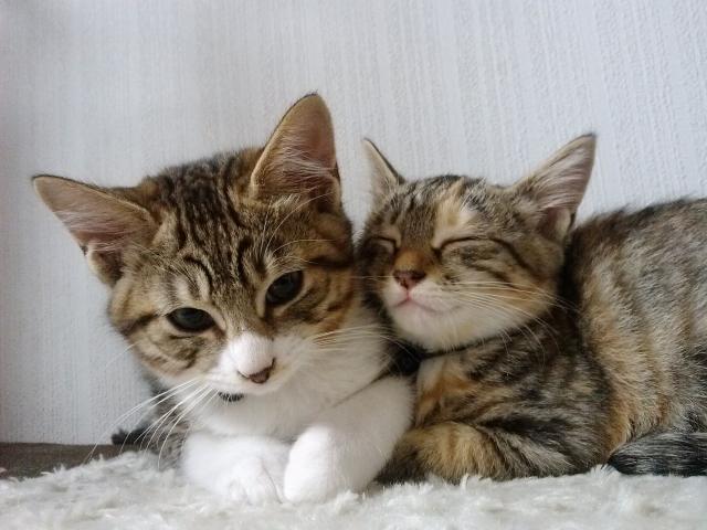 保護猫の譲渡会@tvkハウジングプラザ湘南平塚