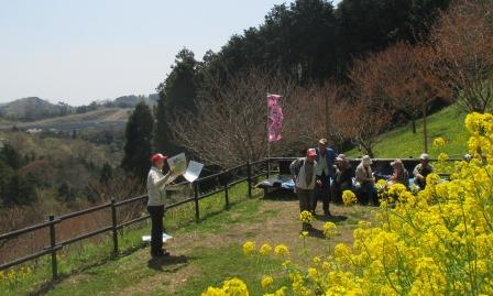 頭高山八重桜と野草観察