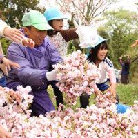 千村地区/八重桜の生産量日本一の景色