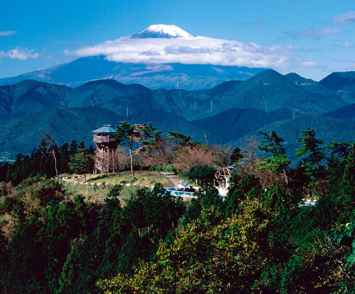 大日堂~ヤビツ峠付近/ドライブで楽しむ桜と丹沢