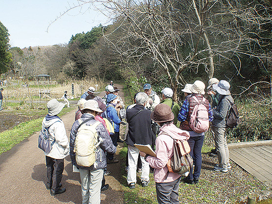 早春の植物や自然を観察「定例自然観察会」参加無料!@県立座間谷戸山公園
