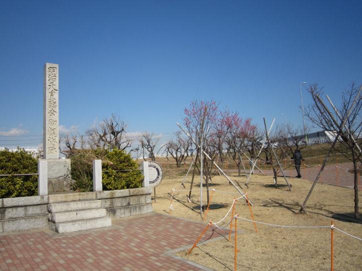 多摩川河川敷の観梅スポット・御幸公園(川崎総合科学高校前)