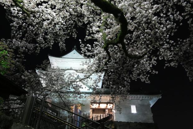 ミニSLや猿と一緒に!?小田原城址公園の桜満喫お花見コース