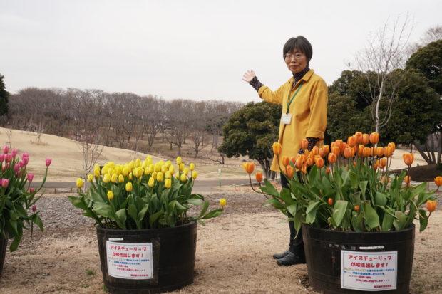 幕末から昭和の横浜伝える桜名所「根岸森林公園」大型遊具もフォトジェニックに