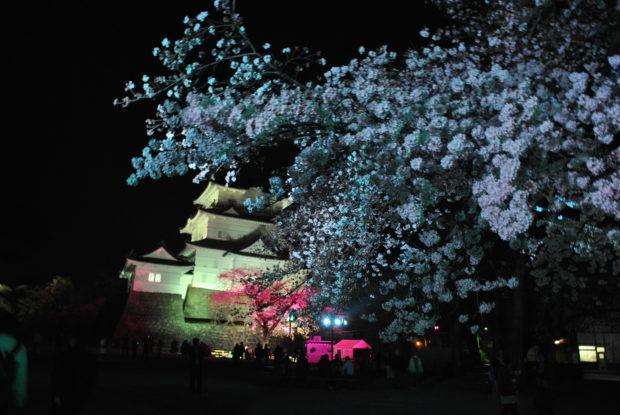 小田原城の夜桜がパワーアップ 天守閣は19時まで開館延長、夜景も満喫