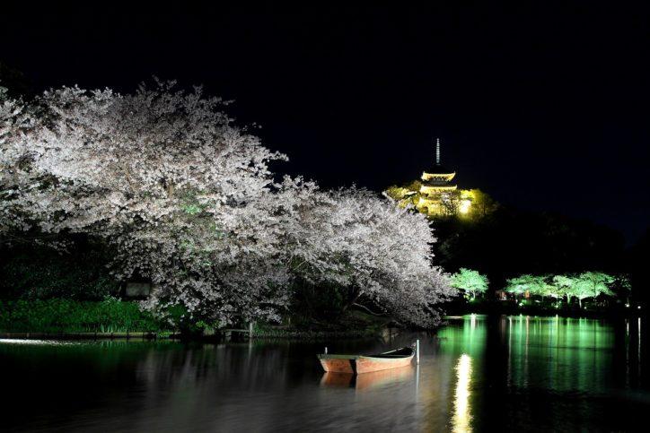 ライトアップで風情ある夜桜を楽しめる「観桜の夕べ」3月31日~4月8日@三溪園(横浜市)