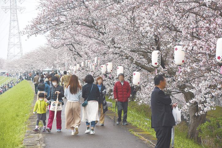 平塚・渋田川沿いの桜並木で4月8日「桜まつり」演奏会やフリマ ライトアップも