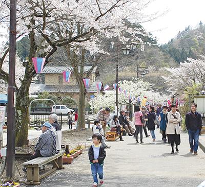 大つり橋と雄大な自然楽しむなら「宮ケ瀬桜まつり」へ